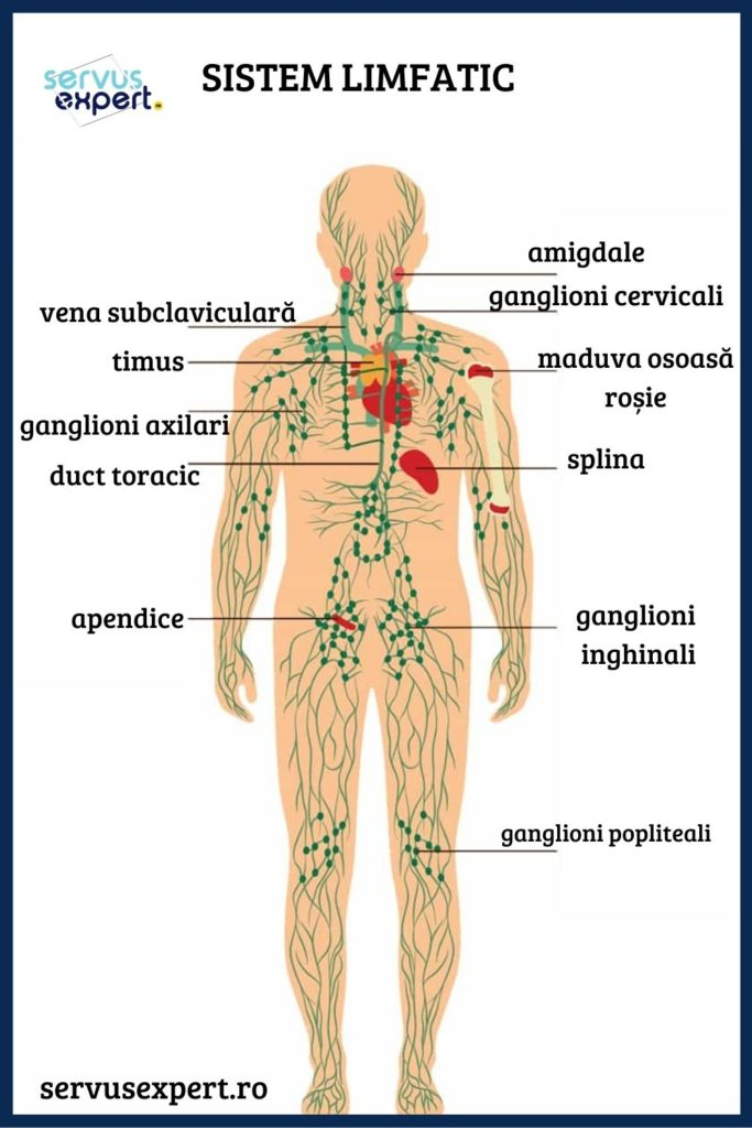 capsicum pentru dureri la nivelul articulațiilor genunchiului durerea radiază până la articulația umărului