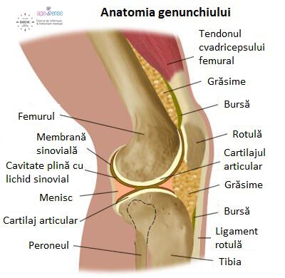 Ce poate răni în articulația genunchiului