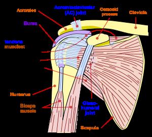 Întărirea ligamentelor articulației umărului - Durerea de umar