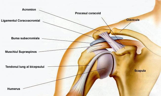 fractură închisă a tratamentului articulației umărului schema de tratament pentru osteoartroza articulației șoldului