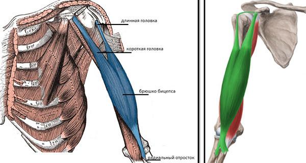tratament articular strogino Eritem infecțios al durerii articulare