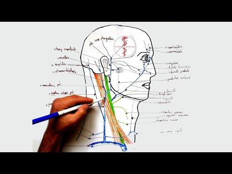 Inflamația ligamentelor și tendoanelor articulației șoldului