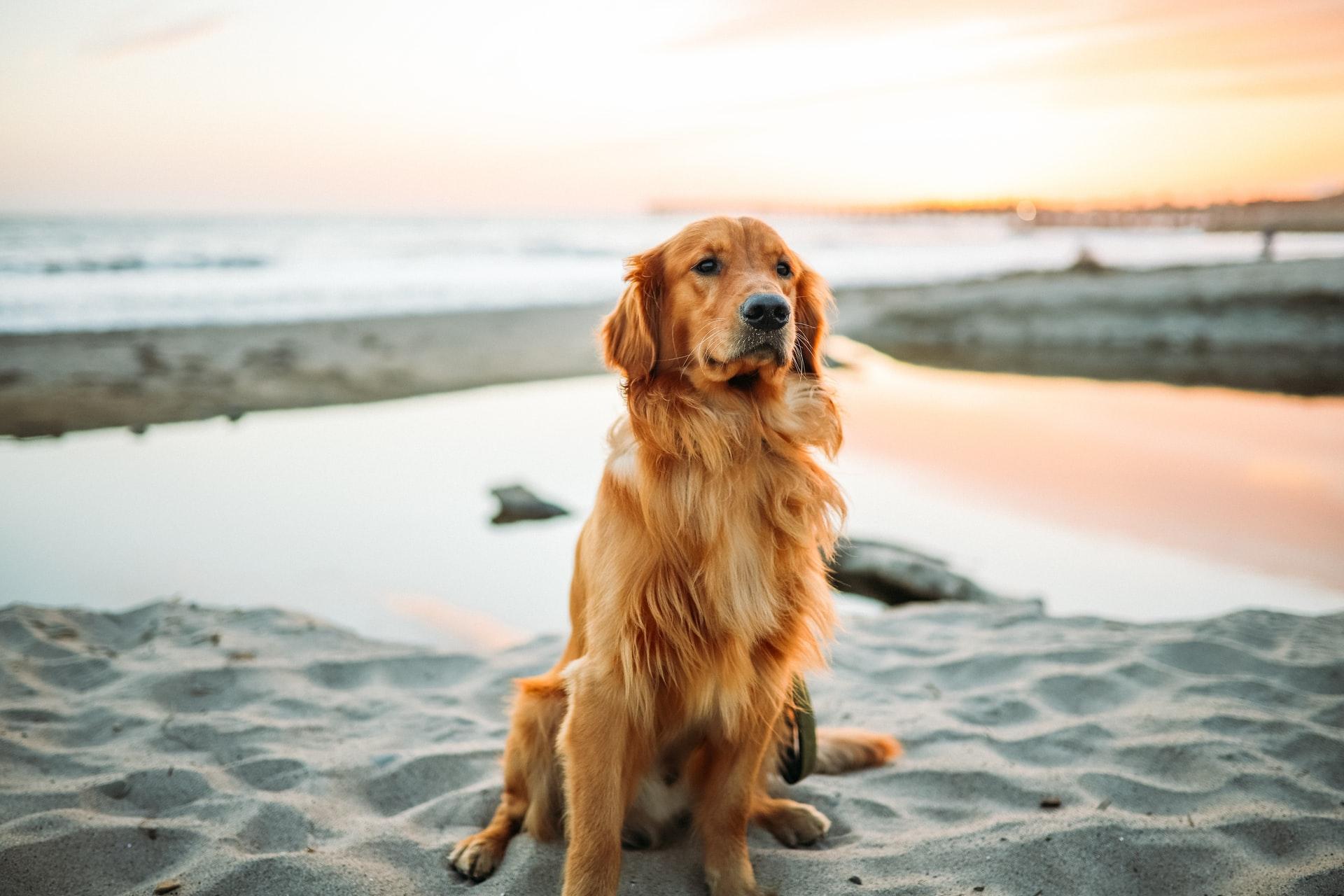 APLAZYL (Prodivet) Supliment nutritiv pentru articulaţii, câini şi pisici 60 tbl - Maxi Pet online