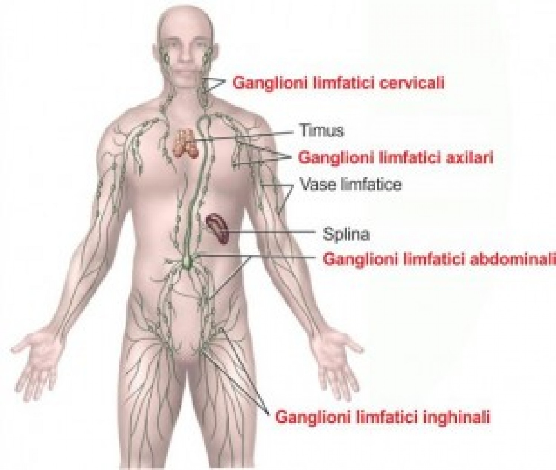 dureri până la genunchi durere la partea articulației genunchiului la interior