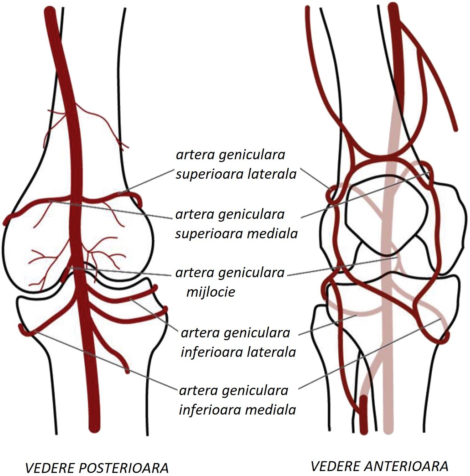 metode de tratament pentru artroza gleznei