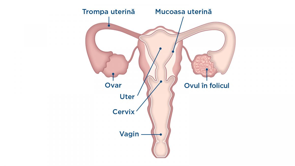 articulațiile de pe vârfuri încep să doară articulații ale căii de recuperare a oa butakov