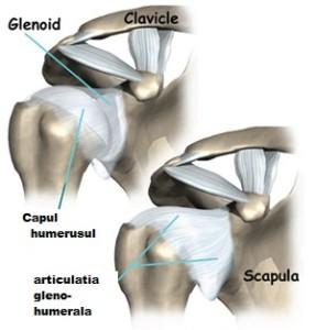 IRM imaginea articulației umărului (secțiunea axială)