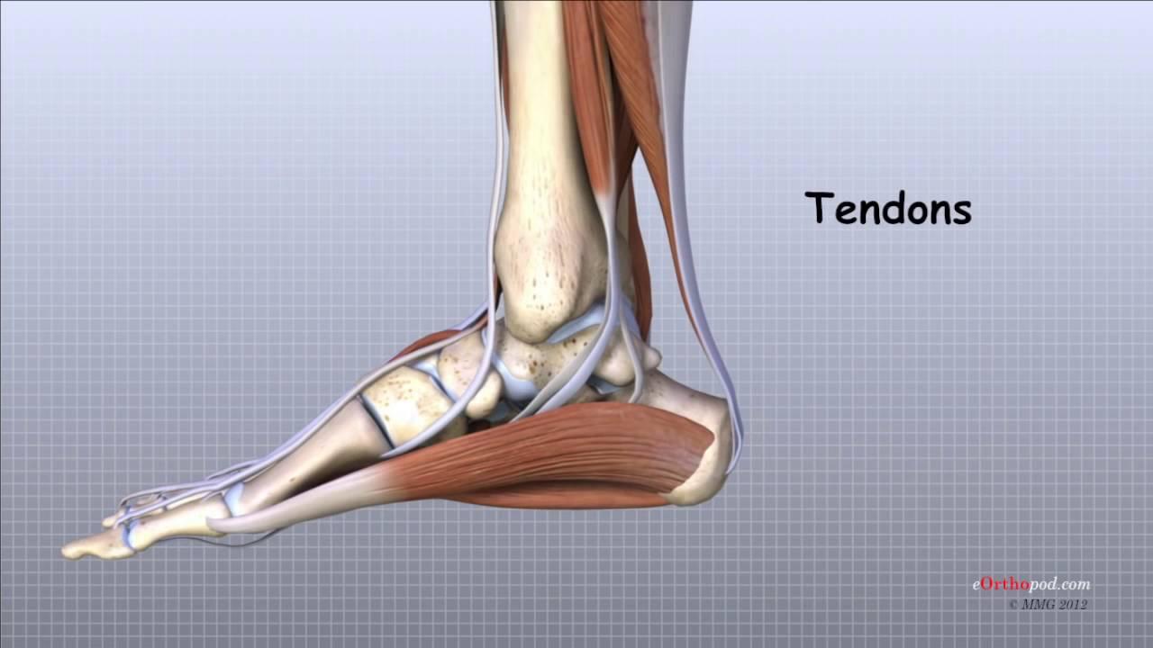 articulațiile medicinii piciorului artroza deformată și tratamentul acesteia