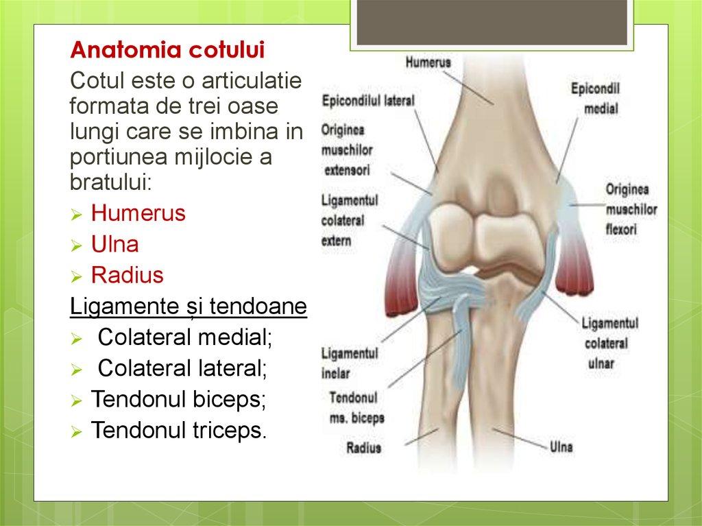 inflamația musculară a articulației cotului
