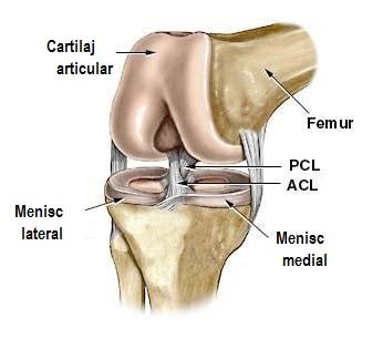 sigilii în articulația genunchiului