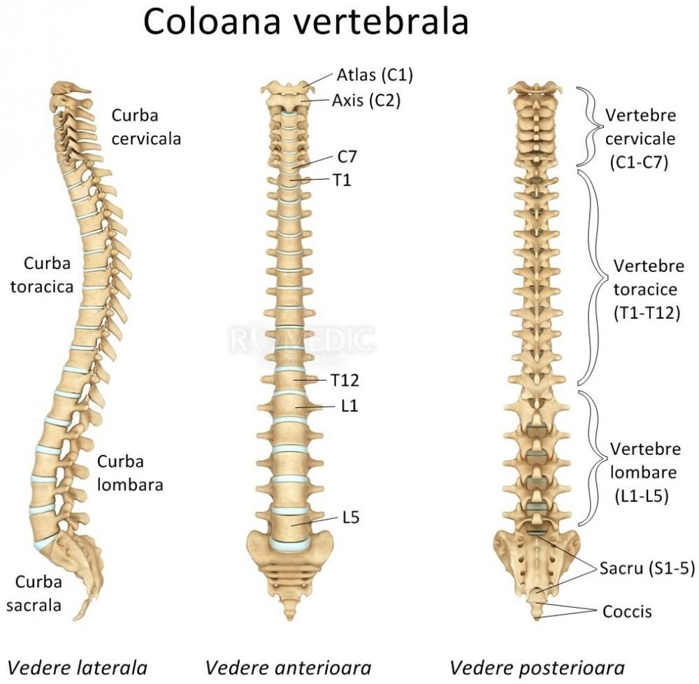 boli ale articulațiilor vertebrale costale