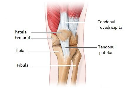 gel pentru artrita genunchiului tratamentul rupturii meniscului medial al genunchiului