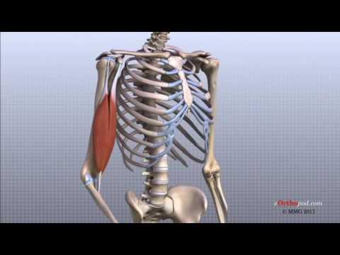 dureri articulare și unguent tratament articulația doare pe vreme