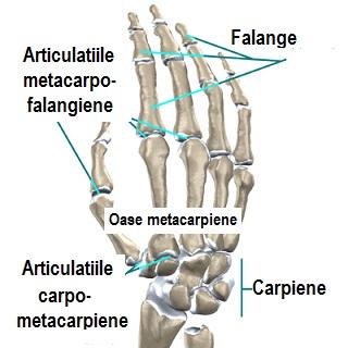 denivelări apoase rănesc articulațiile cum să anesteziați durerea de șold