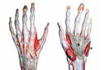 Durerea durere bruscă la încheietura mâinii drepte Daunele