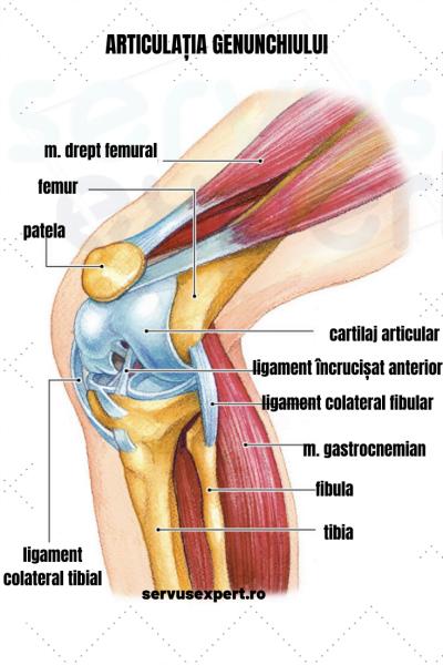 crăpături și dureri ale articulației genunchiului