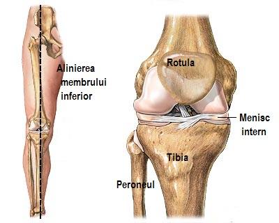 articulațiile genunchilor și coatelor