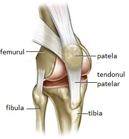 reduce articulațiile cu artrita