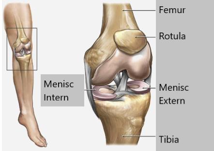 menisc al articulației genunchiului cum să tratezi