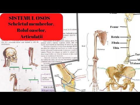 Articulară în genunchi - Articulațiile se umflă roșu rănit