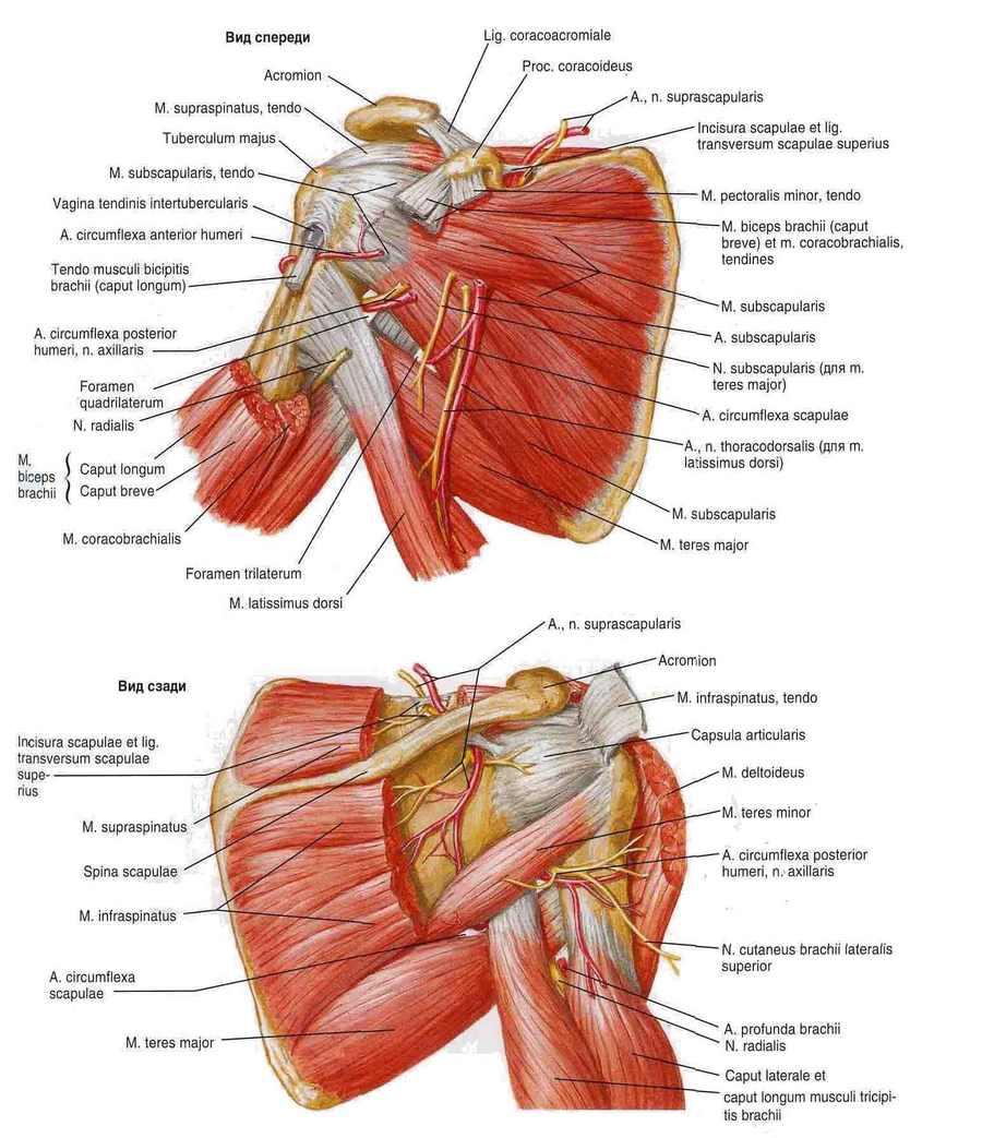 boli musculare ale articulației umărului Pot să-mi încălzesc mâinile cu artrită