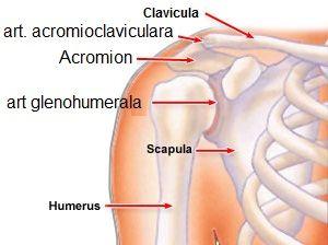 care a vindecat artroza articulației umărului