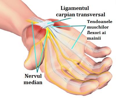câte ligamente ale articulației încheieturii mâinii prescriptia durerii articulare turmeric