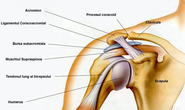artroza dureri de umăr noi medicamente pentru tratamentul artrozei