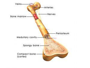 fracturi de afectare osoasă și articulară