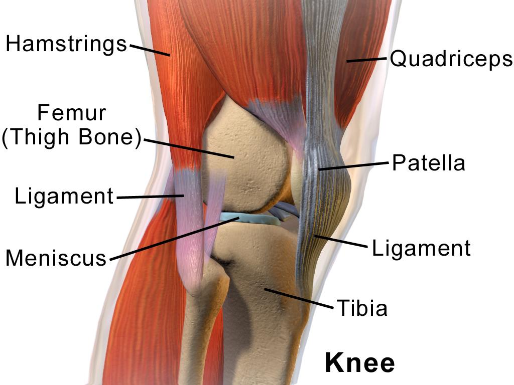 genunchiul se încurcă în articulație