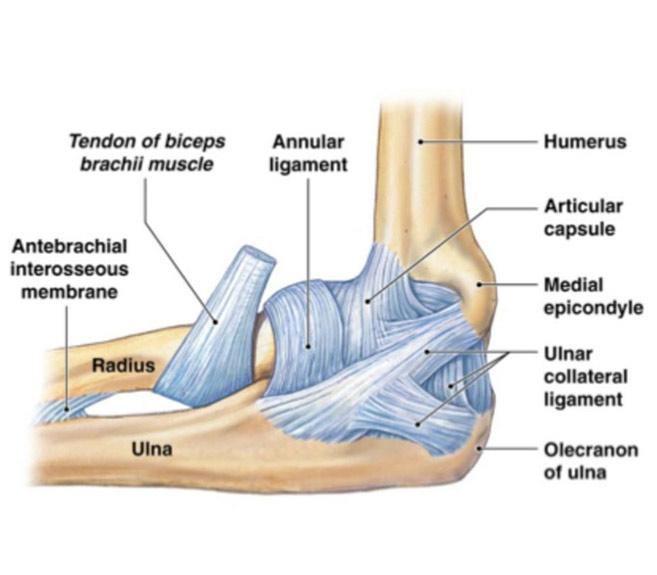nervul în tratamentul articulației cotului