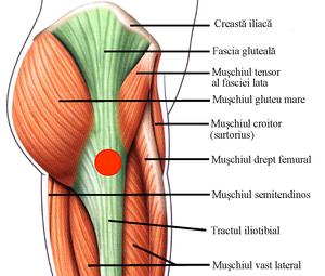 Probleme la șold la femei unguent pentru osteochondroza I