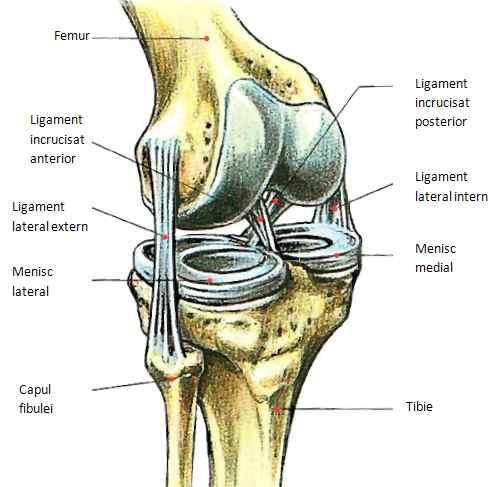 Recuperare după ruperea ligamentelor articulației umărului - Ruptura de ligamente | CENTROKINETIC