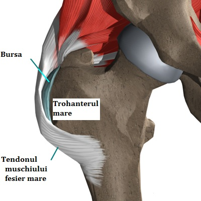 ritmul durerii articulare încep să apară durerile articulare
