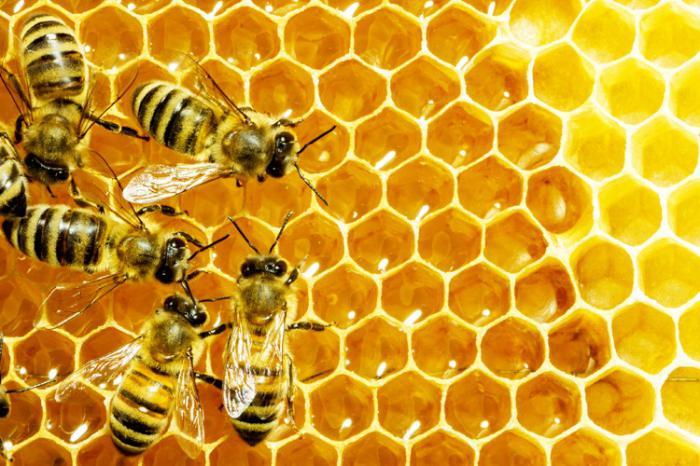 Venin de albine în tratamentul artrozei