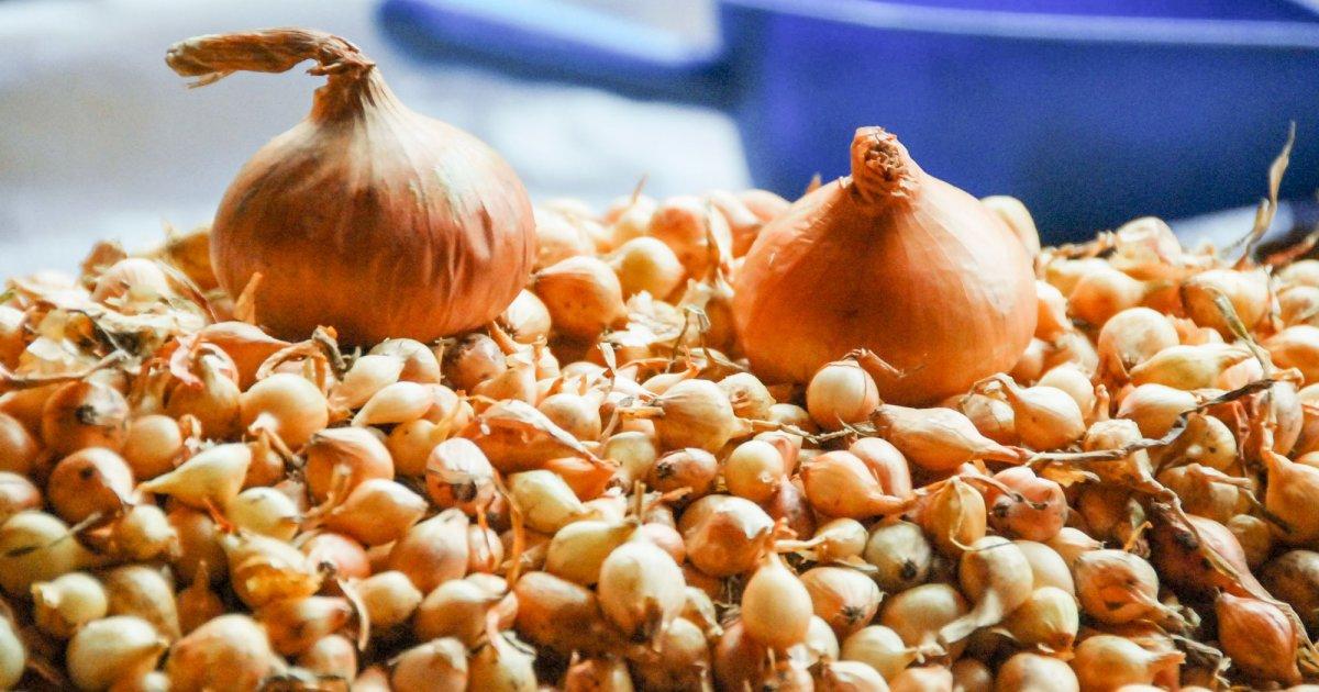 tratamentul artrozei cu ceapă