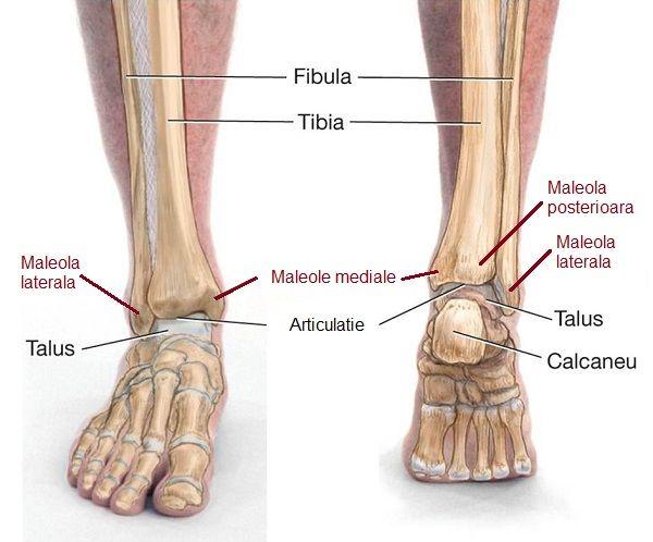 refacerea articulației gleznei după fractura piciorului pilule de reparații comune recenzii