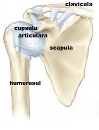 durere în articulația umărului drept și omoplat