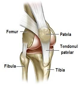 compasiune bandaj pe genunchi cu varicoză)