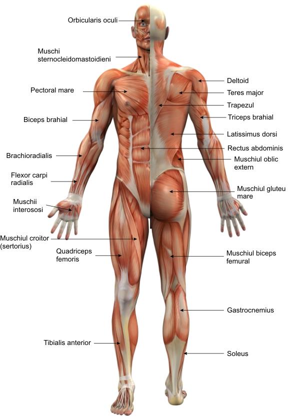 Articulațiile picioarelor doare după alergare. Durere la picioare dupa alergare, care...