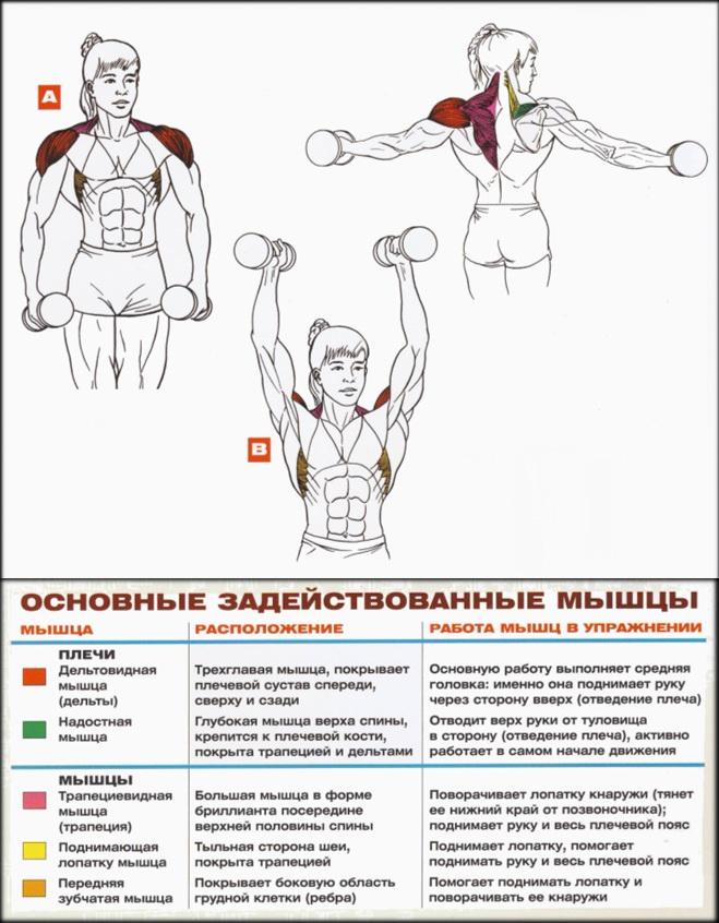 Deteriorarea mușchiului supraspinat al articulației umărului