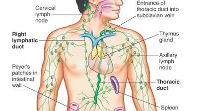 Tratamentul articulațiilor limfatice