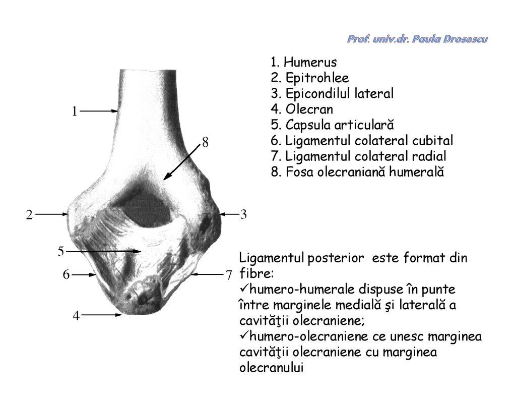 mijloace pentru întărirea ligamentelor și articulațiilor